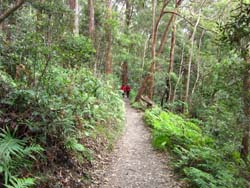 Yoga Retreat bushwalk